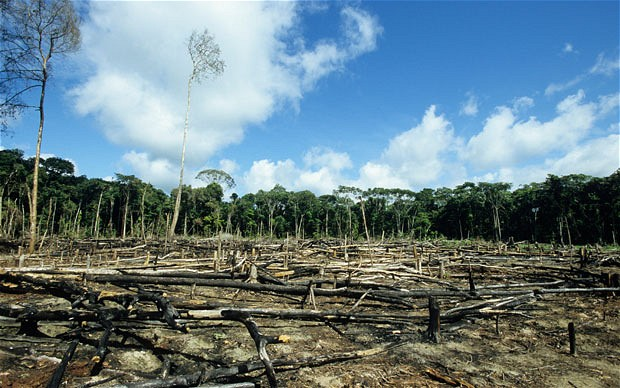 The Chain: Malaysian BLD Tops List of Major Deforesters in 2018