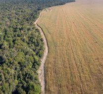 deforestation-cerrado